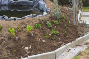 Den här hörnan har fått lite nya plantor.